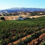 Western View of Reyes Winery