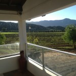 view of vineyard from terrace2